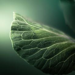 Cuba Gallery - Leaf Nature
