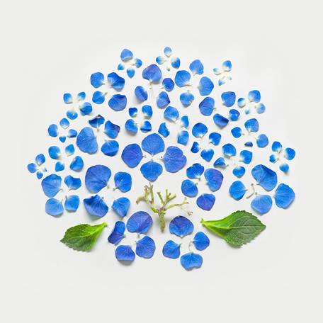 Fong Qi Wei - Exploded Flowers Serie 001