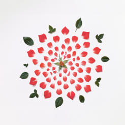 Fong Qi Wei - Exploded Flowers Serie 003