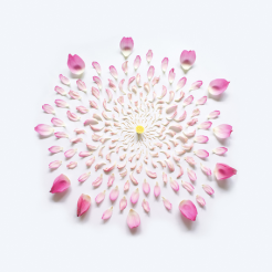 Fong Qi Wei - Exploded Flowers Serie 005