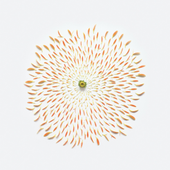 Fong Qi Wei - Exploded Flowers Serie 008