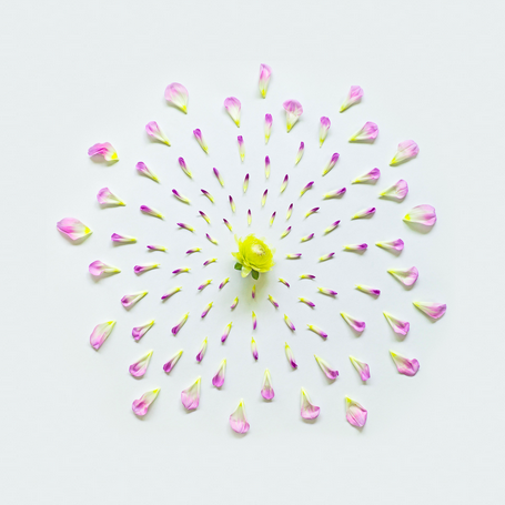 Fong Qi Wei - Exploded Flowers Serie 009