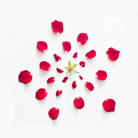 Fong Qi Wei - Exploded Flowers Serie 012