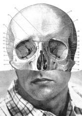 Steven Quinn - Face Off 16