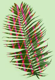 Sarah Illenberger - Wonderplant Series - Wonderplant 4