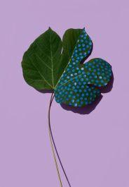 Sarah Illenberger - Wonderplant Series - Wonderplant 8