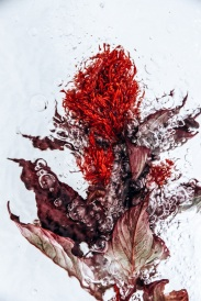 Lisa Sorgini - Flotsam Series 010
