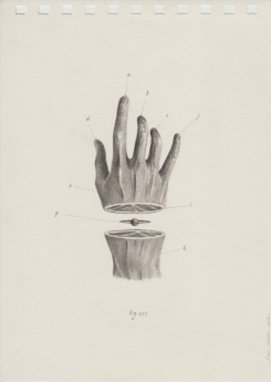 Pencil drawing on paper of a sectioned hand.