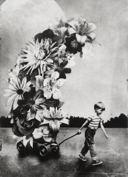 Little baby boy carrying giant flowers.