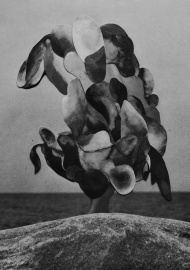 Abstract black and white paper cut collage.