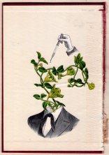 Man portrait with a plant head.