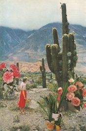 Tiny woman contemplating plants and flowers into a desert.