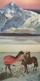 Group of horses putted into a mountains landscape.