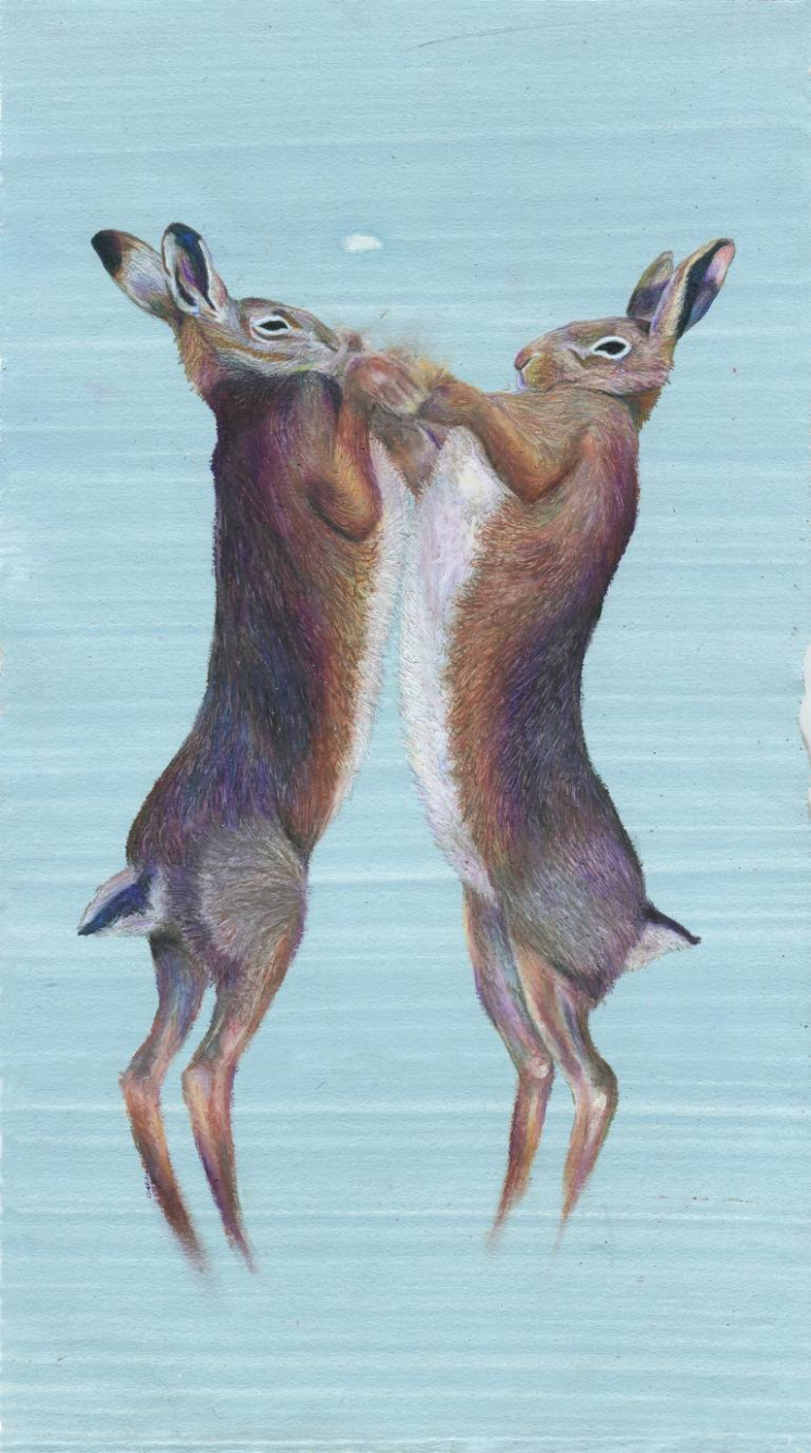 Portrait of two hare.