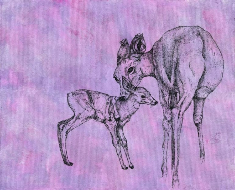 Portrait of two deer.