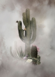 Digital collage of a group of cactuses.