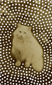 Vintage portrait of a cat.