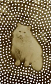 Vintage portrait of a cat.