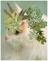 Collage of a cat and a plant.
